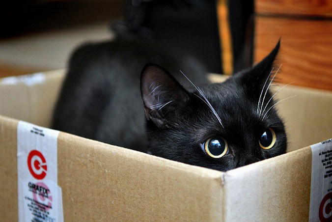 dzien-czarnego-kota
